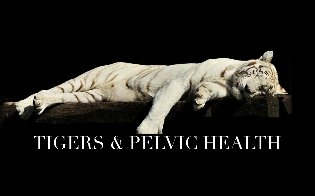 Tigers And Pelvic Health